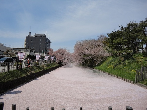 外濠に散る桜の花びら